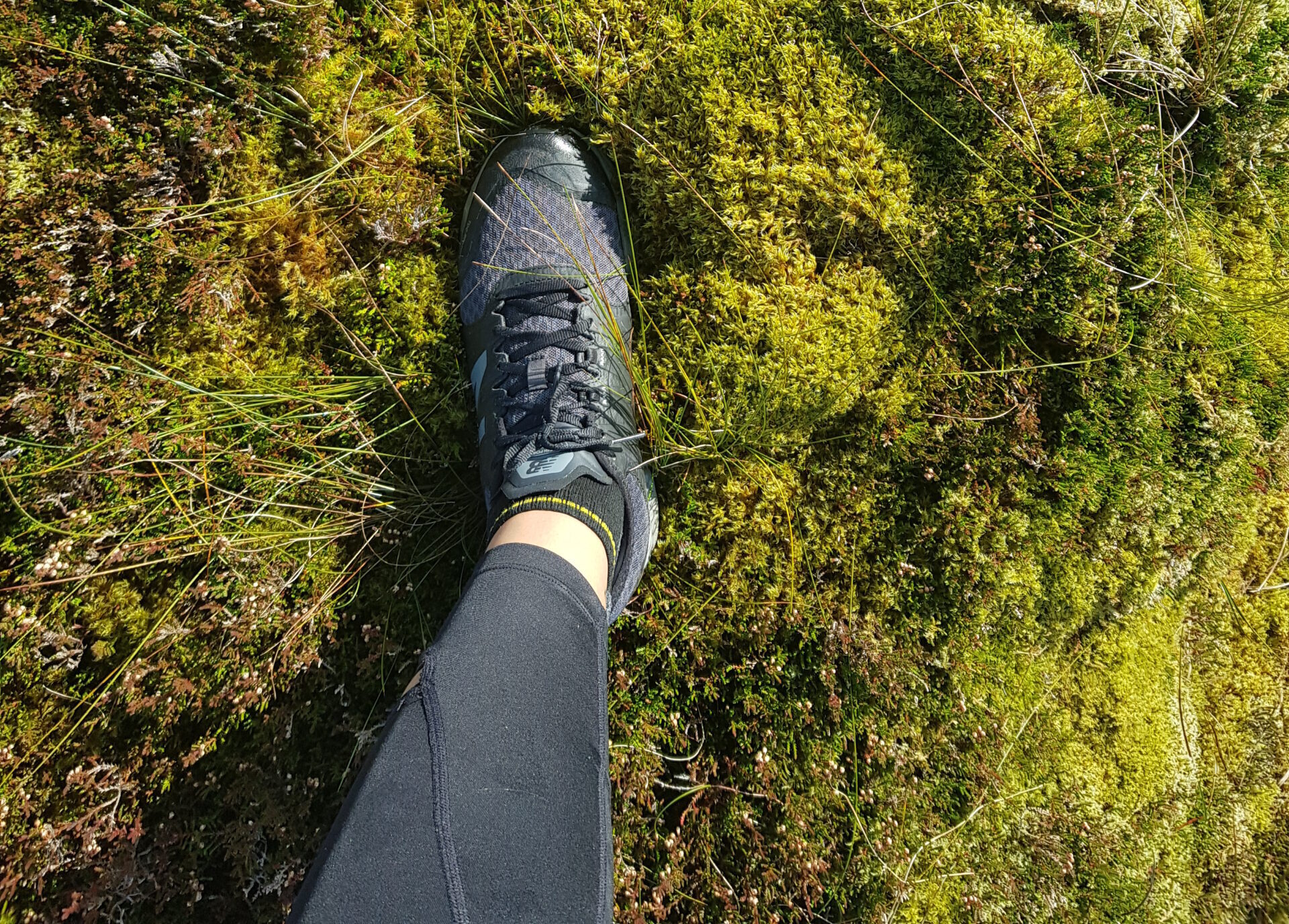 lost on a bog