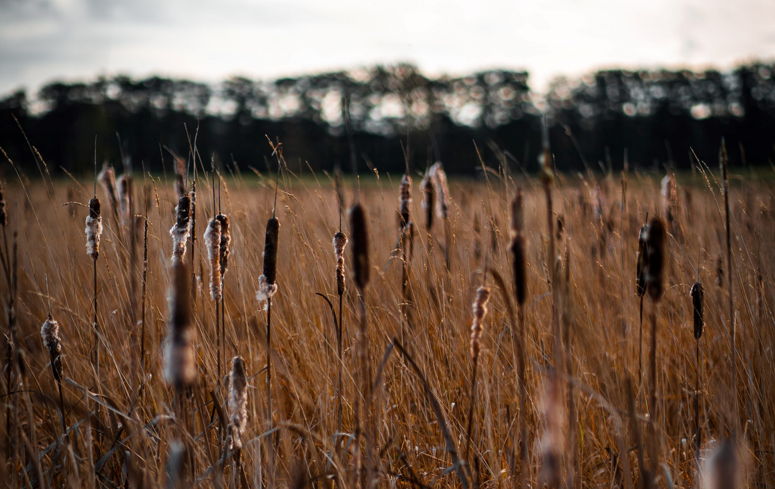 Agriculture and peatlands: the need for a new balance