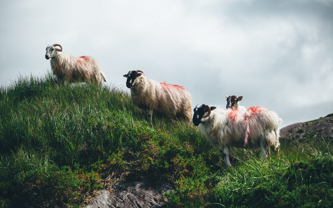 Reimagining the CAP: a conversation with Irish farmers